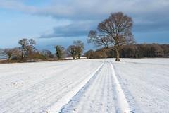 Leading lines........... (klythawk) Tags: leadinglines tracks winter nature clouds bluesky sunlight shadow blue brown grey green orange yellow olympus omd 1240mm dorkethead calverton nottingham klythawk
