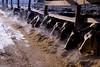 breakfast buffet (kelemen.photography) Tags: cows holstein farm dairy feedbunk winter tomkelemen nikondf goshen ny