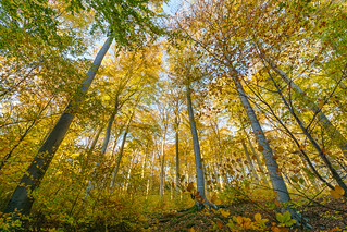 Herbst im Nationalpark Jasmund