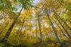 Herbst im Nationalpark Jasmund (Matthias Hertwig) Tags: matthias hertwig herbst nationalpark jasmund rügen wald buchen natur sony a6000