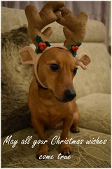 Merry Christmas (H. Smithers) Tags: merry christmas everyone flickr wishes wish true antlers seasonal holidays