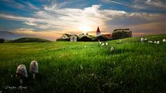 Iceland 2017 - Glaumbær turf farmhouse (cesbai1) Tags: glaumbær glaumbaer farm farmhouse turf ancient ferme en tourbe is islande iceland islanda islandia meadow