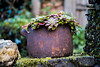 _DSC6212 (xav_roberts) Tags: nikon nikonv1 nikkor dof moss lichen nature funghi rust autumn wintersun moisture dew morningdew outdoor countryside rural plants nikkon1 nikkor32mm nikonft1 sigma105mmf28 sigma105mm sigma