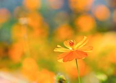 Summer Flowers (mclcbooks) Tags: flower flowers floral macro closeup denverbotanicgardens colorado