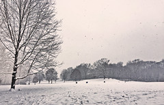 Snow in Prospect Park (Alexander H.M. Cascone [insta @cascones]) Tags: nyc new york city brooklyn park prospect nature winter prospectpark snow snowing tree field meadow trees landscape snowfall cold brrr white