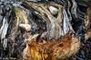Driftwood (judy dean) Tags: judydean 2017 driftwood