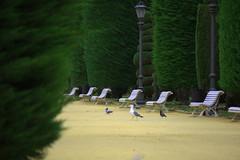 Parque Genovese (hans pohl) Tags: espagne andalousie cadix parcs banc arbres trees oiseaux birds