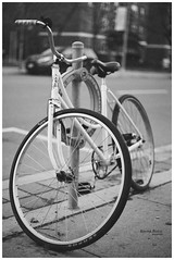 Bikes of Toronto - White knight (KaushikBiswas28) Tags: bikesoftoronto 35mm monochrome ilfordxp2 bw yongest filmphotography ilford downtowncamera iluvtoronto bikes stilllife fatalframes framedtoronto imagesoftoronto street streetphotography urban streetvision analog canonae1 bokeh cycle 6ix ishootfilm iluvfilm