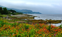 Scotland West Highlands Argyll looking north from Toward Lighthouse 22 August 2017 by Anne MacKay (Anne MacKay images of interest & wonder) Tags: scotland west highlands argyll north toward lighthouse sea coast landscape xs1 22 august 2017 picture by anne mackay