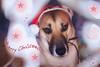 Merry Christmas! (petrapetruta) Tags: cute santa