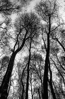 Trees - Explored :-)