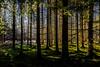 The Greens of Winter (*Capture the Moment*) Tags: 2016 forest licht lichtstrahlen light lightbeam rayoflight sonnenstrahlen sonya7m2 sonya7mii sonya7mark2 sonya7ii sonyfe2470mmf4zaoss sonyilce7m2 wald winter