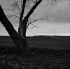 In a Field, Washington (austin granger) Tags: field washington palouse winter crop telephonepoles topography land soil farm tree stark cold fallow disked road lastlight square film gf670
