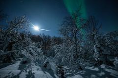 Ute i vinterskogen (B_Olsen) Tags: norwegian northernlights auroraborealis forest snow winter landscape nightscape woods polarlicht nightphoto snowy moonlit arctic snø skog trær vinter frost nordlys kåfjord birtavarre norway tree sky