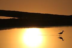 sunspot (PawL23) Tags: petchaburi thailand asia goldenhour silhouette reflection saltfields sunrise sun bird