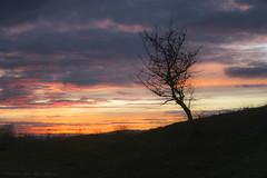 Lone Tree (mesocyclone70) Tags: sunset tree romania minimalist minimalistic transylvania sunrise color colorful sky skyscape weather landscape targumures