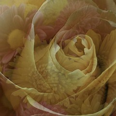 """...too many flowers, wait, is that possible?    Double exposure MM (Allyndon - """"On Location"""") Tags: flora 7dwf """"doubleexposure"""" macromondays rose flowers carnations orange"""