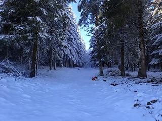 Un petit tour en forêt du Ché