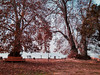 Nigeen club.🍂 (suhail.amin16) Tags: autumnleaf watercolor season nature alone time reflection bestoftheday winters kashmir