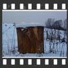 Rezerwat Wyspy Zawadowskie (Foto & Urban Art) Tags: rezerwat wyspy zawadowskie zima jesień