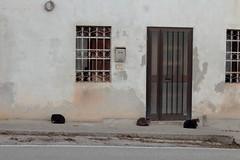 cat (jakker_trails) Tags: cats pets abandoned abandonedhouse country colliberici veneto italy italia tripcar trip travel sosta door window wall stray canon eos1300d