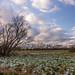 Sumpfseewiesen Güstrow