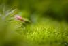 L'explorateur (autainvillois) Tags: macro foret limace bébé millimetre mousse
