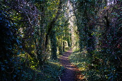 A Christmas Walk (JamieHaugh) Tags: clevedon northsomerset england uk outdoors color colour nature sony a6000 christmas walk path trees woods forest purple green xmas merry happy gb greatbritain