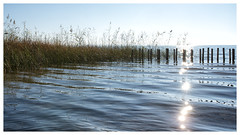 Midi (Pluie du matin) Tags: hatman lac lake eau water hourtin gironde france calme sérénité serenity calm coolness paysage landscape soleil sun midi