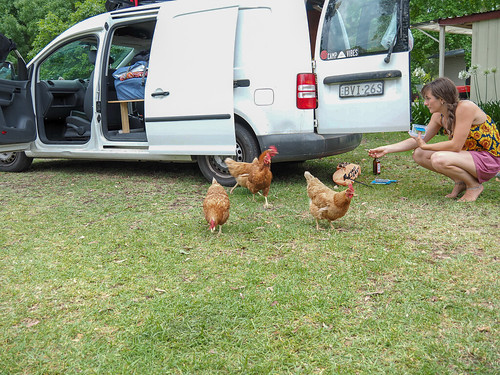 """Nowa Nowa Chooks • <a style=""""font-size:0.8em;"""" href=""""http://www.flickr.com/photos/160671654@N04/39318355042/"""" target=""""_blank"""">View on Flickr</a>"""