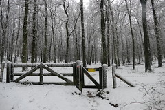 Walking in the snow (paulusdegroot) Tags: walking path veluwe veluwezoom posbank zijpenberg gelderland wandelen