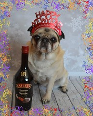 Happy New Year Flickr Friends! (DaPuglet) Tags: pug pugs dog dogs pet pets animal animals newyear 2018 celebration celebrate baileysirishcream toast party costume hat love coth5 alittlebeauty