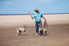 170731 Hunstanton-0067 (whitbywoof) Tags: rupert sheena rescue pet dog lurcher greyhound staffie whippet
