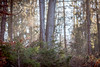 Erleuchtung (ploppjr) Tags: wald forest trees bäume licht austria hiking walking wanderlust nature outdoor explore keepexploring