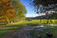 Campdeville Milly sur Thérain Oise (roland.grivel) Tags: automne millysurthérain campdeville oise picardie beauvaisis hautsdefrance pature
