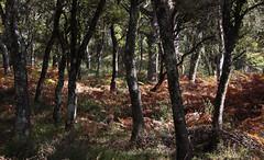 Ezkaba mendi (isabel muskiz) Tags: tree bosque naturaleza nature navarra niebla forest