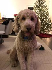Muddy's handsome Bernie!