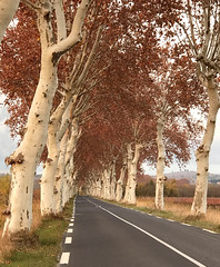 Languedoc (Jolivillage) Tags: jolivillage hérault languedoc languedocroussillon occitanie france francia europe europa strada road arbres alberi trees planetrees automne autum autumno geotagged picturesque