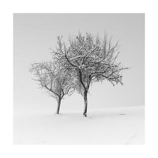 Two trees in silence