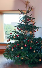 Joy of a Real Christmas Tree (haberlea) Tags: stratford stratforduponavon tree newplace williamshakespeare shakespeare christmas window decorations christmastree