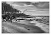 Natural beach (bavare51) Tags: dars weststrand ostsee balticsea wasser bäume strand sand wolken landschaft landscape himmel meer wellen