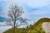 _J5K8989-9001.0417.Tà Xùa.Bắc Yên.Sơn La (hoanglongphoto) Tags: asia asian vietnam northvietnam northwestvietnam nature landscape scenery vietnamlandscape vietnamscenery vietnamscene outdoor tree hill hillside plant canon tâybắc sơnla bắcyên tàxùa thiênnhiên phongcảnh thựcvật cây ngọnđồi sườnđồi phongcảnhtàxùa câytàxùa câyviệtnam sky mountain cloud núi mây canoneos1dsmarkiii zeissdistagont3518ze