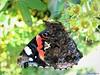 Butterfly 1544 (+1000000 views!) Tags: butterfly borboleta farfalla mariposa papillon schmetterling فراشة