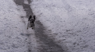 Some got very excited about the snow :))
