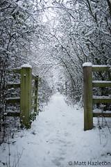 Winter wonderland (Matt Hazleton) Tags: canon100400mm canoneos7dmk2 canon eos 7dmk2 100400mm matthazleton matthazphoto northamptonshire outdoor nature snow winter