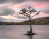 Loch Lomond tree (3) (Donard850) Tags: lochlomond scotland trossachs autumn lake sunset tree water