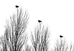 kiel_schilksee_DSC03643_bw2 (ghoermann) Tags: kiel schleswigholstein deutschland deu friedrichsort geo:lat=5439574024 geo:lon=1018845654 geotagged birds tree winter