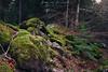 Musgo en las rocas. Selva de Oza (Alberto Lacasa) Tags: gree autumn musgo selva canon paraiso huesca rocas pirineos trees eos stone aragon arboles musk forest 1740 5d naturaleza otoño oza pyrenees parquenatural verde
