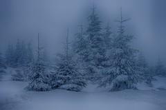 Winter Forest (sigiha1953) Tags: wald forest landschaft bayern landscape bavaria schnee snow nebel fog