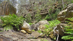 Nattai Creek _8 (Tony Markham) Tags: fortyfootfalls 40footfalls lakealexandrareserve nattaicreek creek waterfall falls sourthernhighlands bushwalk walk